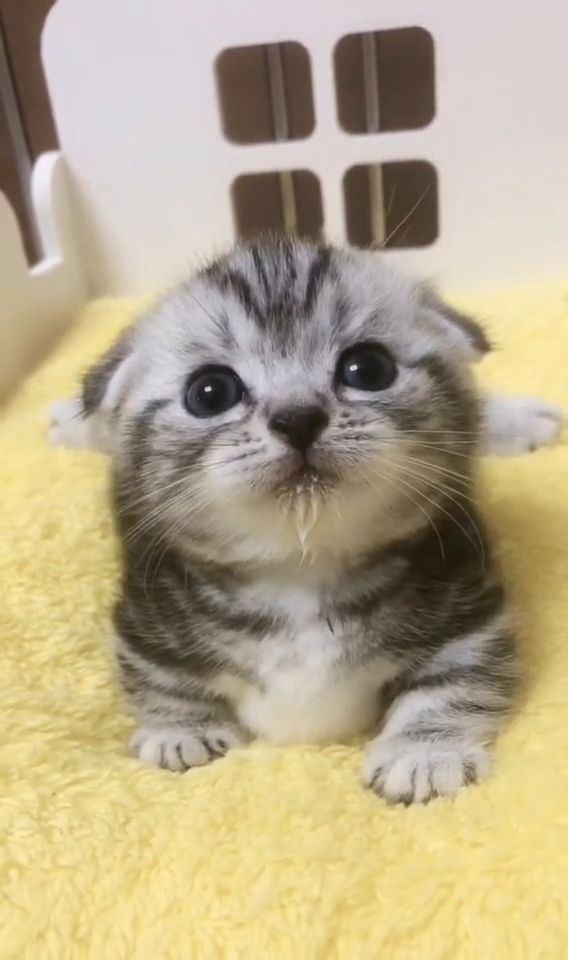 Kitten has just finished milk