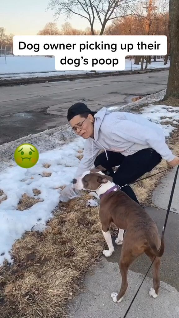 Ways Persuade Dog Owners to Pick Up Poop