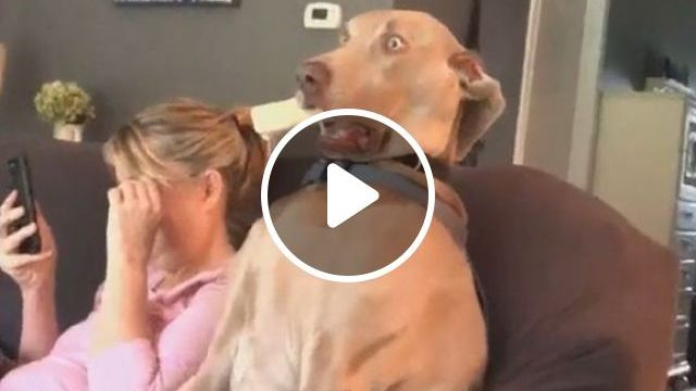 When Your Older Dog Gets Too Clingy, Pets and Animals, Dogs, Senior Dog Care