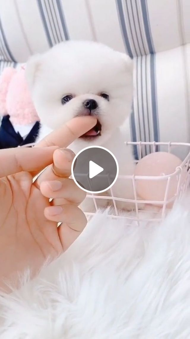 How To Keep A Dog Happy Healthy In A Small Apartment - Video & GIFs   Home and Garden, Apartment Living, Pets in Apartments