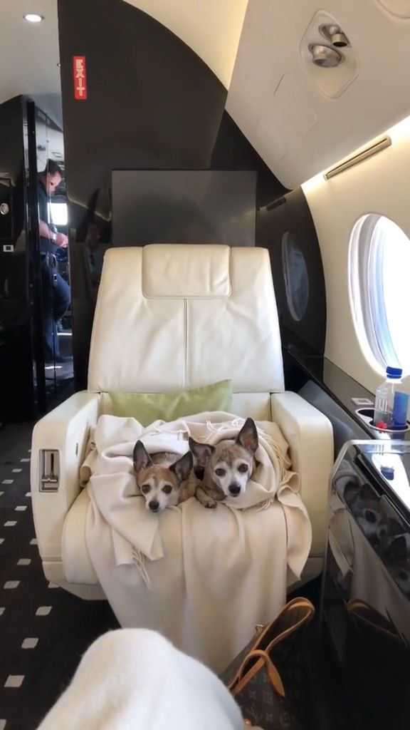 Finding Right Dog Care While You're on Vacation - Video & GIFs | Pets and Animals, Dogs, Day and Vacation Care for Dogs