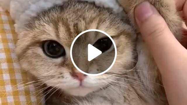 Reasons Why Cats Are The Best Pets - Video & GIFs | cute cats, cute animals, soft mattresses