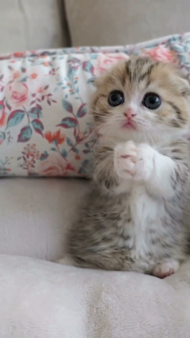 kitten is wanting something