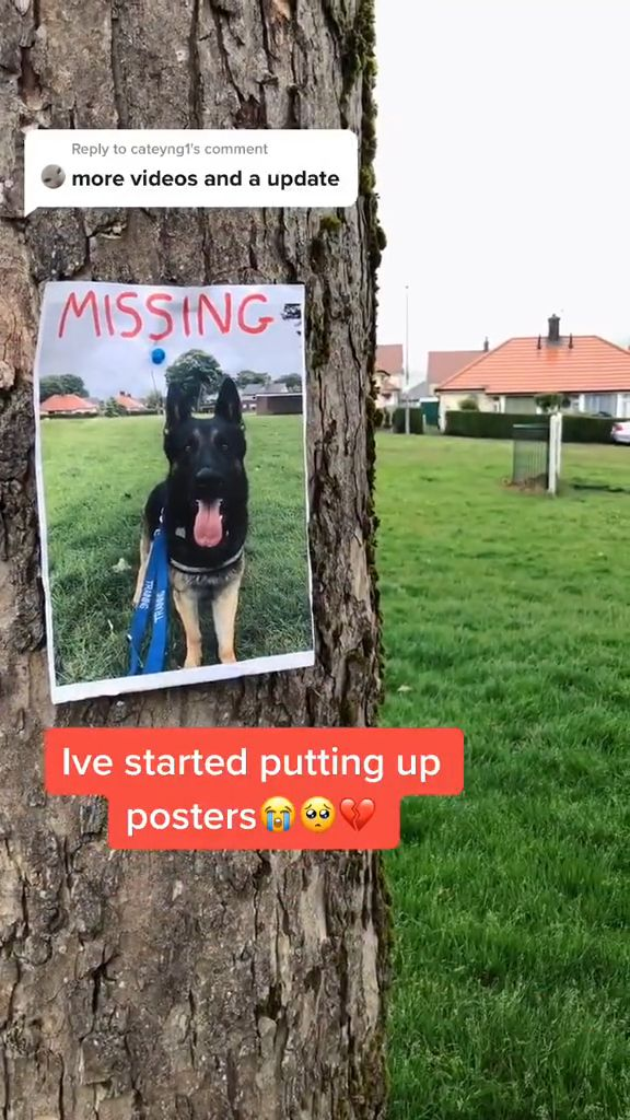 What to do if your Dog is lost or stolen - Video & GIFs | Home and Garden, Disaster Preparedness, Home Security, Theft
