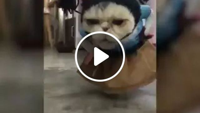 Cat Turns Into A Ninja - Video & GIFs | Cute cats, pet clothes, funny animals