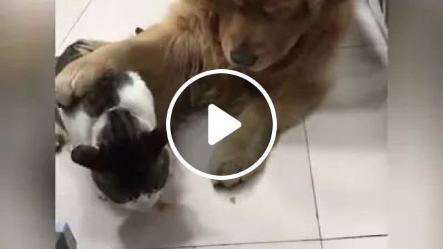 Greedy Dog Takes Cat Food In Kitchen - Video & GIFs   Dog, adorable, animals, pets, greed, cat food, kitchen
