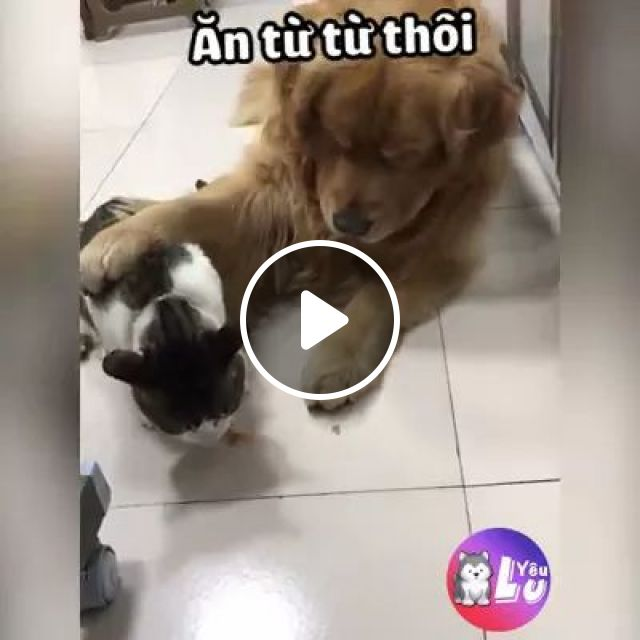 Greedy dog takes cat food in kitchen