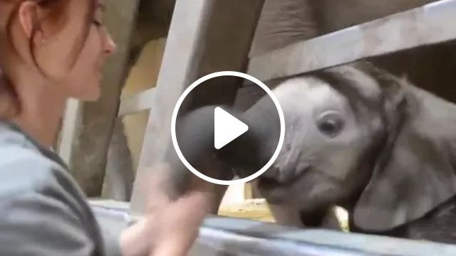 girl takes care of baby elephants in zoo, Cute girls, women's fashion clothes, animal care, baby elephants, American zoo