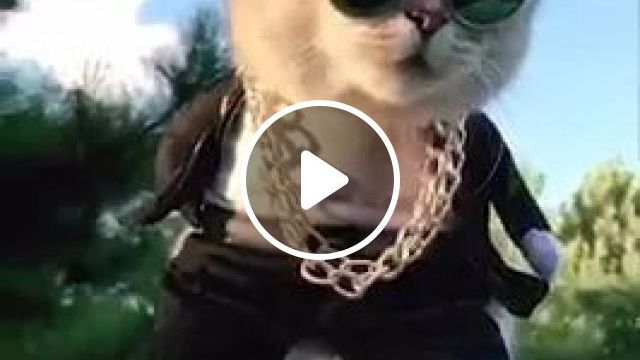 I Am Very Handsome - Video & GIFs | cat, adorable, cool