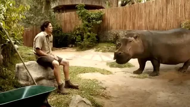 Beatbox and Hippo