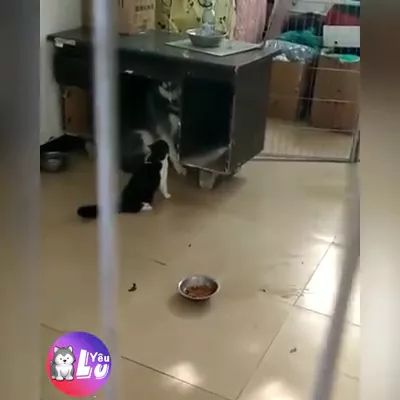 Cat and a dog play together