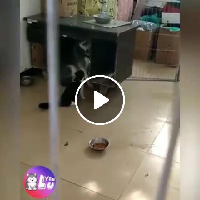 Cat And A Dog Play Together - Video & GIFs | Smart cats, cute dogs, funny animals, wooden tables
