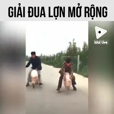 Pig riding competition in China