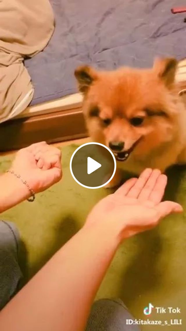 Fun Ways to Test Your Dog's Intelligence, dog, adorble, funny, smart