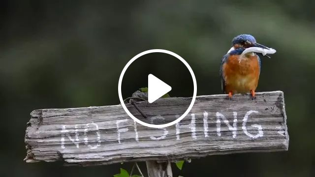 You Must Not Catch Fish Here - Video & GIFs   Cute birds, funny animals, beautiful nature
