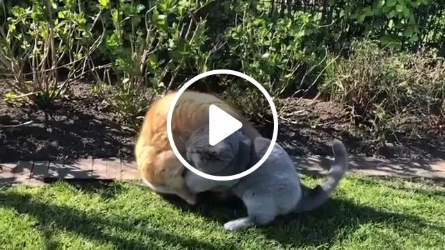 Cats play in yard
