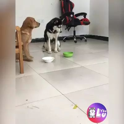 Dogs have feelings too