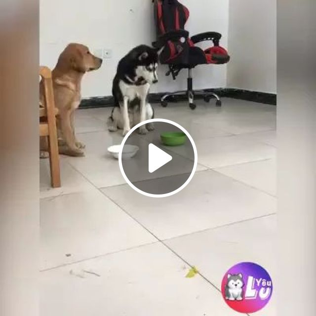Dogs have feelings too, Smart dog, funny animals, delicious food, luxury apartments