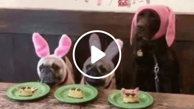 Fastest eating Dog in world, Smart dogs, dogs for cute, funny animals, dog food