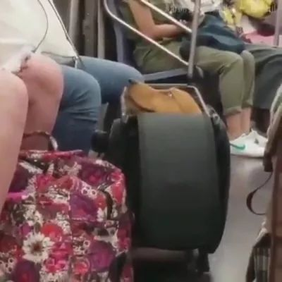 American travel with dog