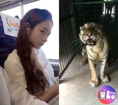 Girl and tiger, who is cooler