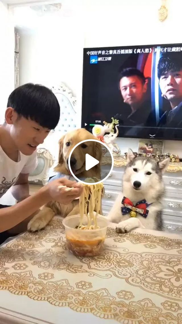 Hey,We Eat Together - Video & GIFs | Smart dogs, delicious food, good men, men's fashion clothes, apartment furniture