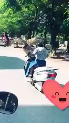 Bird and motorcycle - Video & GIFs   Smart bird, cute girl, female fashion clothes, motocycle, asian street