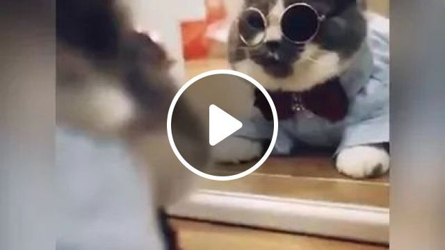 Cat's Dream - Video & GIFs   cat, adorable, funny