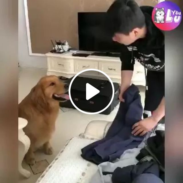 Me And Dog Travel To Europe Together - Video & GIFs   Golden feather dog, European travel together, luggage, fashionable men's clothing