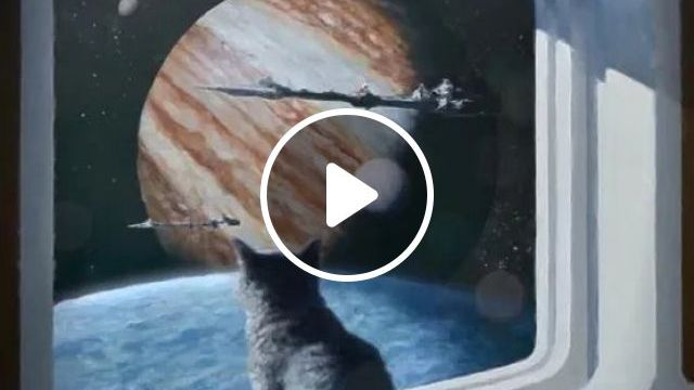 Cat, what do you think about space travel?, cat, universe, spacecraft