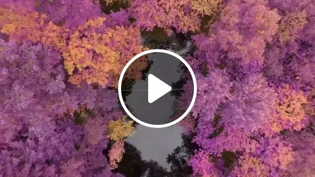 Autumn, A Man Performs Acrobatically On The Rope In Forest - Video & GIFs | nature, paradise, performance, talent, balance, Japan travel