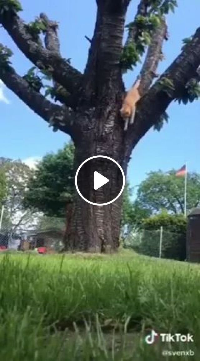 Cat And Squirrel Playing On Tall Trees - Video & GIFs | animals, pets, cats, squirrels, funny animals