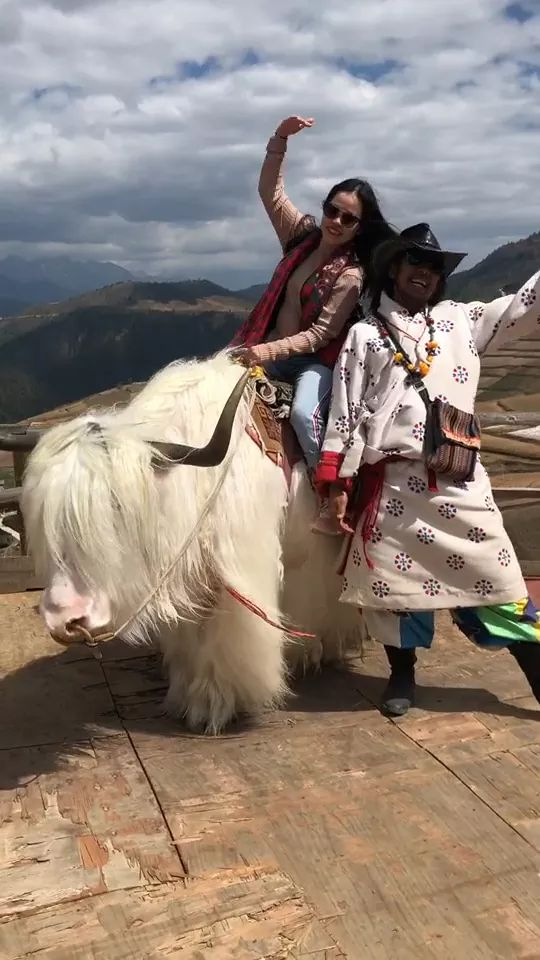 Travel Tibet and ride a cow