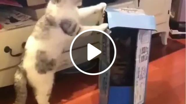 Cats Play In Living Room - Video & GIFs | animals, pets, cats, cat breeds, living room, living room furniture