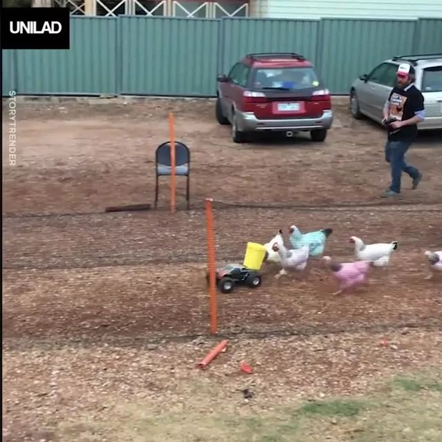a man and toy car are playing with chickens - Video & GIFs   man,male fashion clothes,men's shoes,toy car,chickens