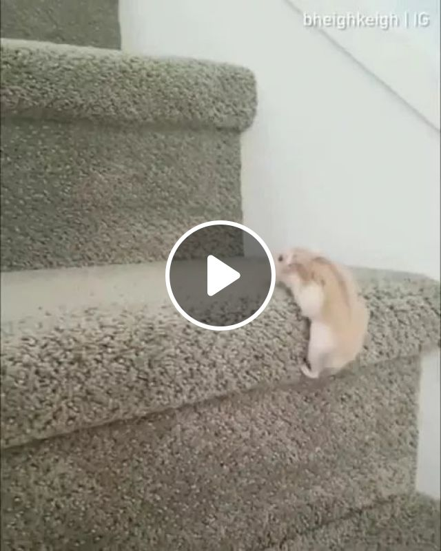 Never Give Up - Video & GIFs | animals, pets, cute animals, apartment mats