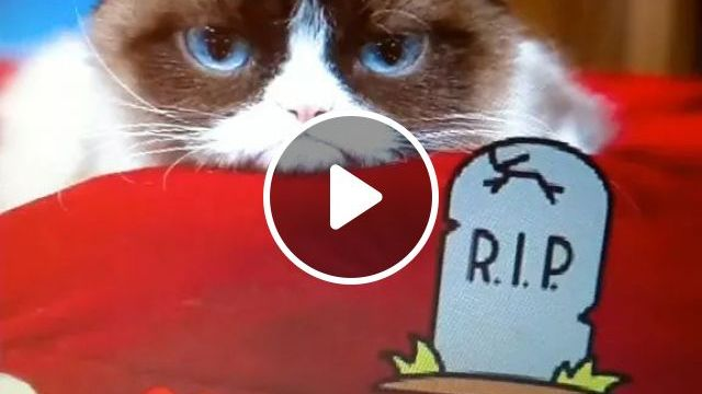Smart Cat And Laptop - Video & GIFs | animals, pets, cats, laptops, web apps