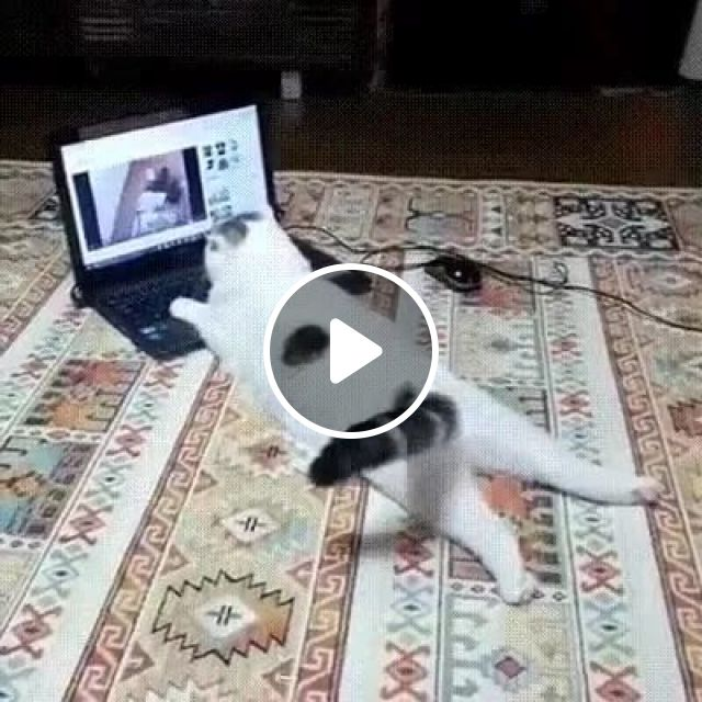 My Cat Loves Laptop - Video & GIFs | animals, pets, cats, cat breeds, business laptops