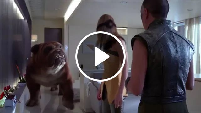 Dog And Cat Are Good Friends - Video & GIFs   animals, dogs, cats, dog breeds, offices, office equipment