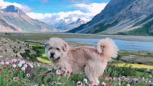 Travel in New Zealand mountain with cute dog