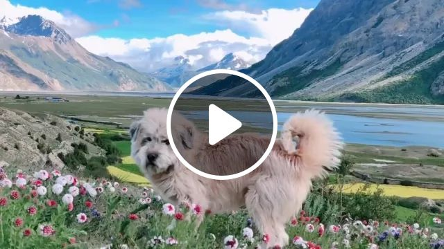 Travel in New Zealand mountain with cute dog, mountain travel, new zealand travel, cute dogs, beautiful scenes