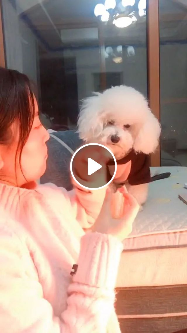 Smart Dog With Girl In Living Room - Video & GIFs | smart dogs, animals, pets, girls, fashionable women's clothes, living room, furniture