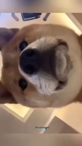 Surprised dog with smartphone