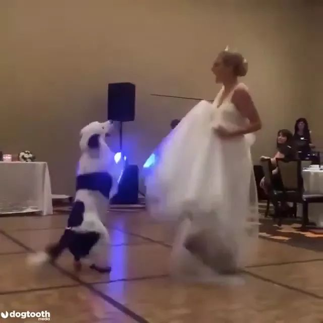 Special guests for wedding - Video & GIFs | special guests,weddings,fashion wedding dresses,brides,dogs,animals,pets
