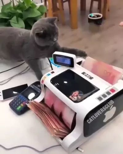 Accountant is using money counter