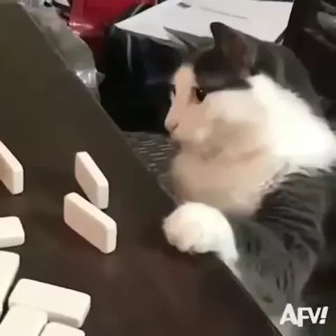 Cat plays chess very well - Video & GIFs   animals,pets,cats,cat breeds,chess players,smart cats,luxurious living rooms