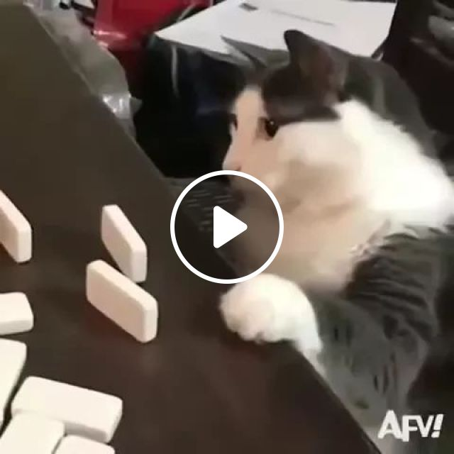 Cat Plays Chess Very Well - Video & GIFs | animals, pets, cats, cat breeds, chess players, smart cats, luxurious living rooms