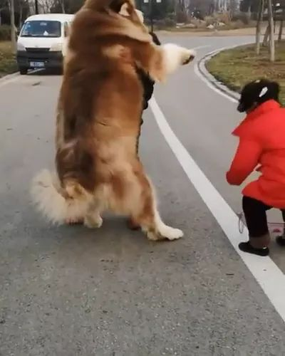 Man and child try to move dog on the street