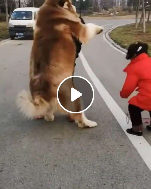 Man And Child Try To Move Dog On The Street - Video & GIFs | men, fashion men, kid, fashion children, pooch, dog breeds, street, luxury vehicles