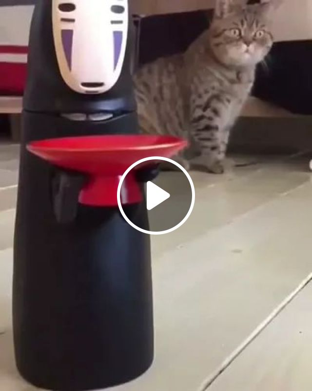 Cat Is Surprised To See Toy Working - Video & GIFs   animals, pets, pet care, active toys